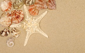 Картинка песок, пляж, лето, ракушки, summer, beach, sea, sand, starfish, seashells