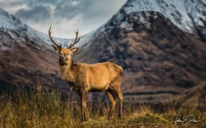 Картинка горы, олень, Шотландия, Reindeer, photographer John & Pou, A Scottish icon, unspoiled Glen Etive
