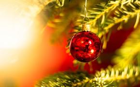 Картинка зима, свет, ветки, красный, сияние, праздник, шар, шарик, Рождество, Новый год, хвоя, боке, ёлочные игрушки, …