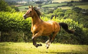 Картинка поле, конь, лошадь, луг
