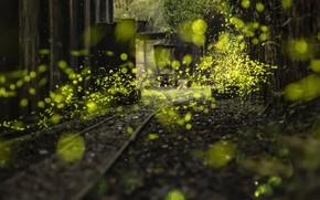 Картинка свет, природа, фон, лепестки, железная дорога