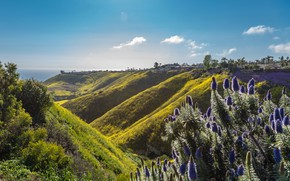 Картинка море, небо, трава, солнце, облака, деревья, цветы, горы, холмы, побережье, горизонт, Калифорния, домики, США, Rancho …