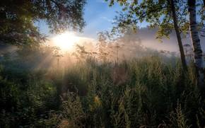 Картинка утро, лучи, природа, деревья, рассвет, травы, Андрей Чиж, лето, солнце, ветки, пейзаж