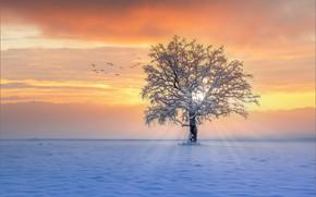 Картинка зима, лучи, снег, закат, птицы, дерево
