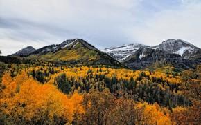 Картинка Природа, Горы, Деревья, Снег, Лес, Пейзаж, Вершины
