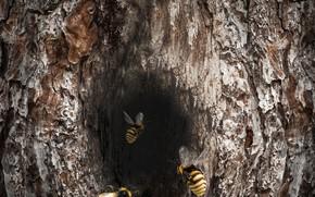 Картинка insect, bee, log