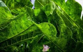Картинка листья, зеленый, растение