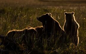 Картинка трава, свет, отдых, поляна, вечер, медведи, коряга, медвежата, силуэты, медведица