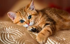 Картинка кошка, поза, котенок, фон, кровать, лапки, шелк, малыш, покрывало, рыжий, мордочка, постель, милый, лежит, одеяло, …