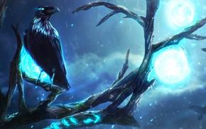 Картинка ночь, дерево, птица, магия, ветка, мистика, арт, ворон