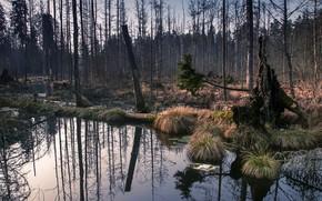 Картинка лес, природа, болото
