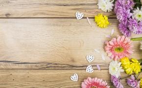 Картинка цветы, colorful, сердечки, хризантемы, wood, pink, flowers, romantic, hearts, spring, violet