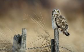 Картинка взгляд, столбики, фон, сова, пестрая, колючая проволока, птица, ограждение, трава