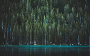 Картинка лес, деревья, озеро, сша, йосемитский национальный парк