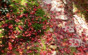 Картинка трава, красные листья, опавшие листья