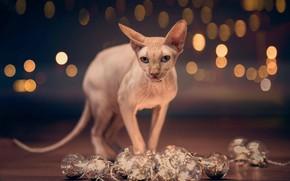 Картинка кошка, взгляд, шарики, блики, сфинкс