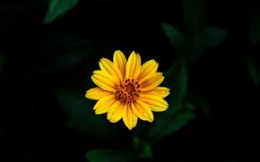 Картинка цветок, желтый, фон, боке
