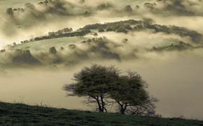 Картинка туман, дерево, мрак