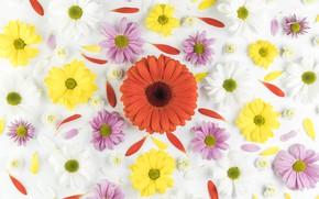 Картинка белый, цветы, фон, colorful, flower
