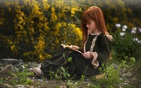 Картинка бабочка, девочка, книга