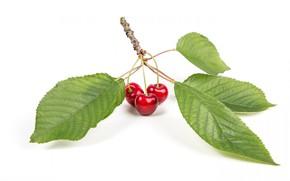 Картинка вишня, лист, ягода, черешня