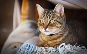 Картинка кошка, кот, взгляд, котенок, портрет, шарф