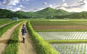 Картинка дорога, поле, девушка, рис