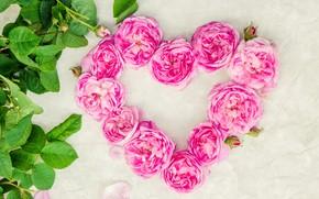 Картинка любовь, цветы, сердце, розы, лепестки, love, розовые, heart, wood, pink, flowers, romantic, petals, roses, floral