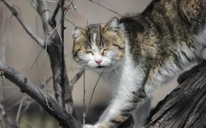 Картинка кошка, фон, дерево