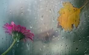 Картинка осень, лето, стекло, капли