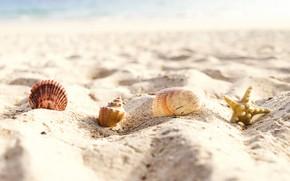 Картинка песок, море, пляж, лето, звезда, ракушки, summer, beach, sea, sand, starfish, seashells