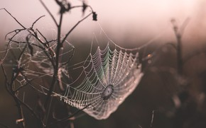 Картинка Природа, Капли, Паутина, Роса, Утро, Ветки, Nature, Web, Morning, Flora, Branches, Drops, Флора, Dew, Droplets, …