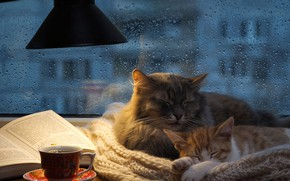 Обои осень, кошка, кот, стекло, капли, кошки, уют, дом, котенок, тепло, серый, комната, дождь, отдых, чай, ...