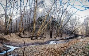 Картинка осень, лес, ноябрь