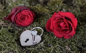 Картинка цветы, замок, роза, ключ, Valentine's Day