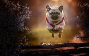 Картинка друг, собака, бег, полёт
