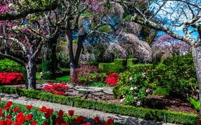 Картинка цветы, парк, деревья, кусты, Filoli Gardens, солнце, Калифорния, США