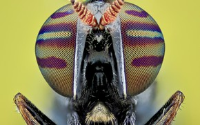 Картинка глаза, макро, муха, фон, портрет, насекомое