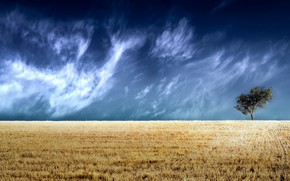 Картинка поле, небо, дерево