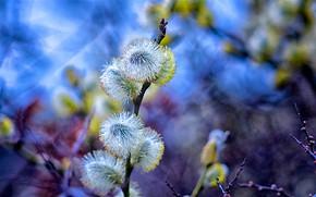 Картинка фото, весна, верба