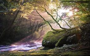 Картинка лес, лучи, река, красота, утро