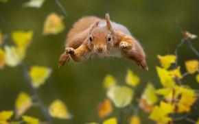 Картинка природа, прыжок, белка