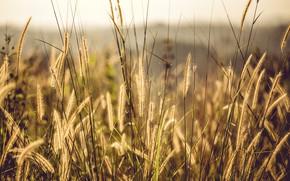 Картинка Природа, Трава, Растение, Растения, Nature, Grass, Flora, Plants, Close-up, Флора, Plant, Petals, Growth, Рост, by …