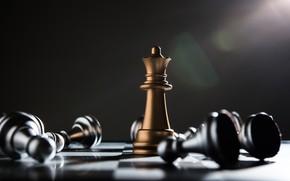 Картинка chess, victory, king