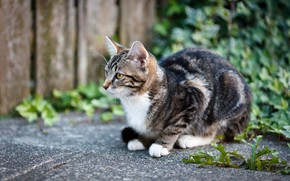 Картинка кошка, кот, котенок, плитка, двор, плющ