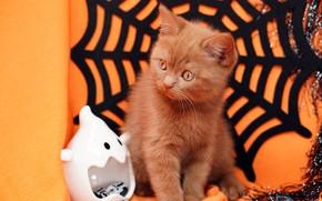 Картинка осень, кошка, взгляд, поза, котенок, праздник, паутина, рыжий, оранжевый фон, хэллоуин, мишура, мордашка, сидит, предметы, …