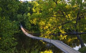 Картинка лето, деревья, мост, река, Березуцкий Александр