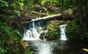 Картинка лес, вода, природа, камни, водопад, бурелом