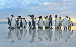 Картинка море, птицы, отражение, стая, пингвины