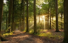 Картинка Дорога, Деревья, Лес